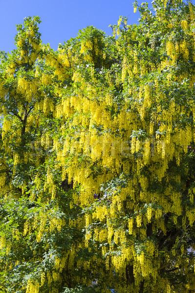 типичный желтый изображение небе фон дождь Сток-фото © magann
