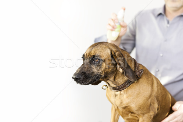 Saldatura cane salone immagine spazio capelli Foto d'archivio © magann