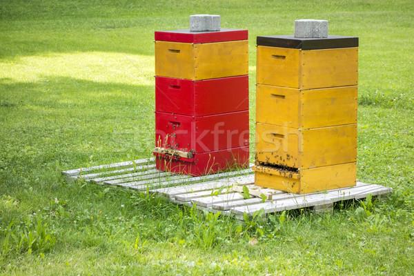 Twee bee groen gras afbeelding voedsel gras Stockfoto © magann