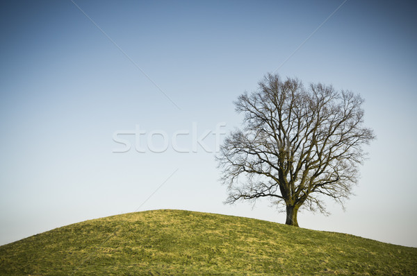 leafless tree Stock photo © magann