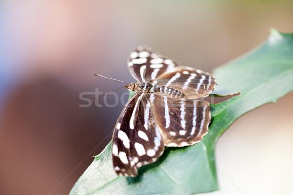 бабочка изображение Nice весны фон зеленый Сток-фото © magann