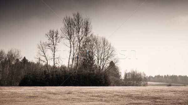 autumn scenery Stock photo © magann
