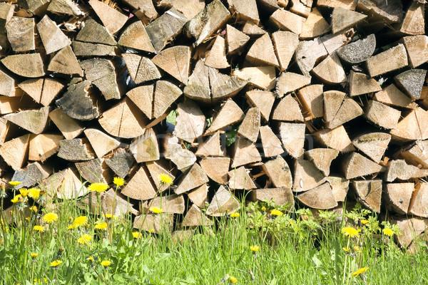 Drewno opałowe obraz kwiat drewna lasu Zdjęcia stock © magann