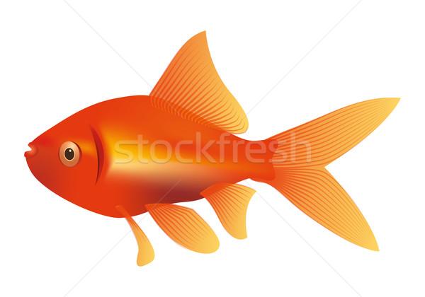 金魚 実例 画像 いい 赤 黄色 ストックフォト © magann
