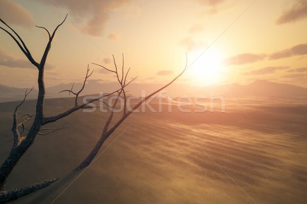 砂漠 日没 画像 枯れ木 砂 ツリー ストックフォト © magann