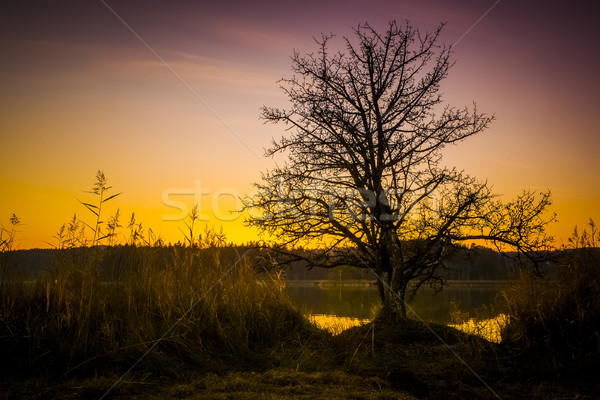 sunset at Osterseen Lake near Iffeldorf Bavaria Germany Stock photo © magann