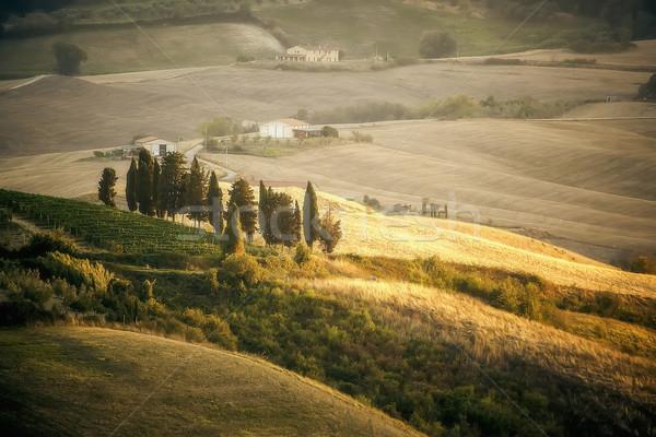 Toszkána kép tájkép Olaszország égbolt fa Stock fotó © magann