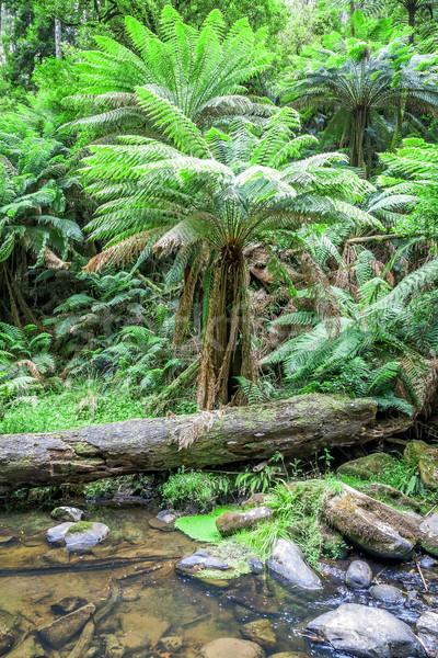 tropical Australia Stock photo © magann