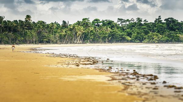 ミッション ビーチ オーストラリア 画像 ツリー ストックフォト © magann