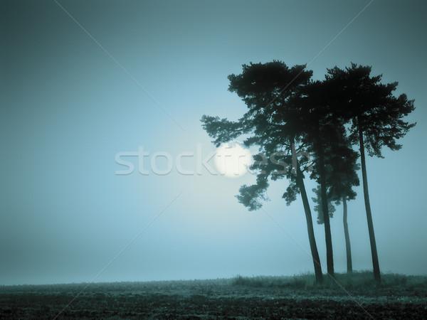 Stock fotó: Kék · hangulat · kép · gyönyörű · tájkép · köd