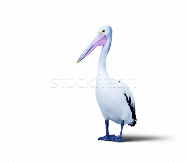 pelican Stock photo © magann
