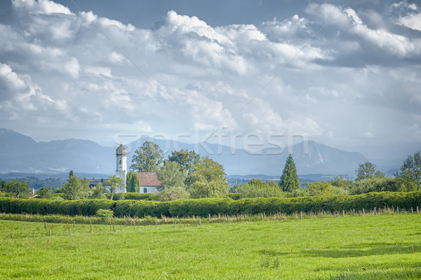 Hauteur image belle ciel arbre herbe Photo stock © magann