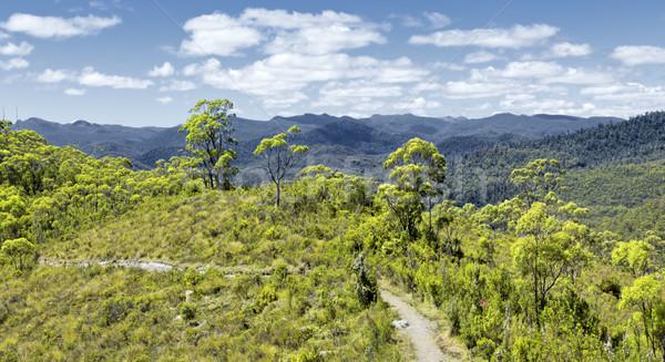 Tasmanië regenwoud afbeelding wolken voedsel gras Stockfoto © magann
