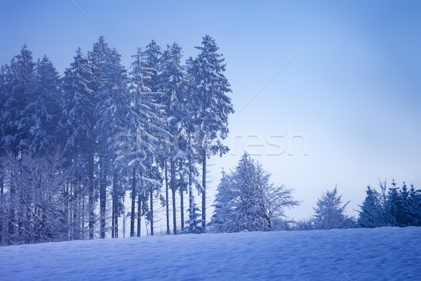 beautiful winter scenery with a tree Stock photo © magann