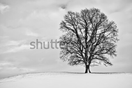 Winter boom landschap bos licht sneeuw Stockfoto © magann