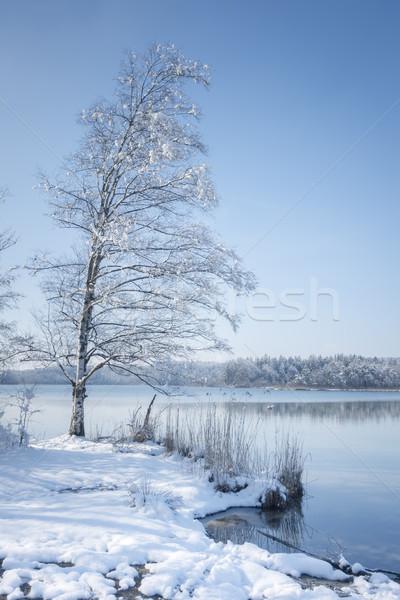 декораций зима дерево снега синий луговой Сток-фото © magann