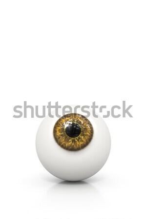 Marrom globo ocular 3D isolado branco Foto stock © magann
