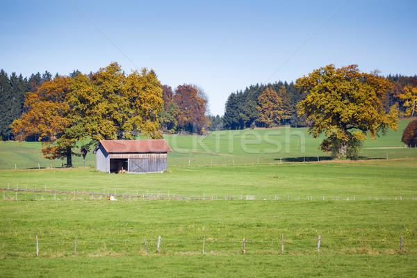 Otono paisaje Alemania imagen hierba forestales Foto stock © magann