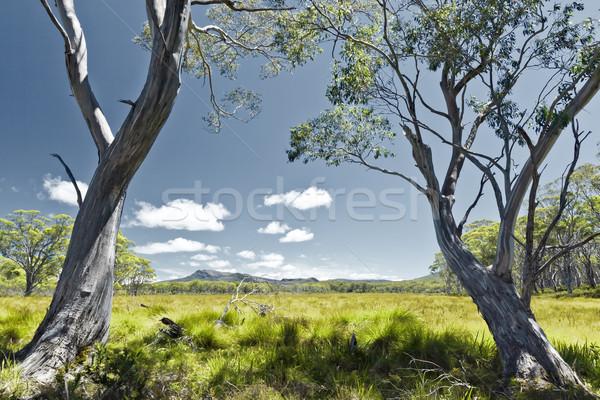 Tazmanya görüntü yeşil ot manzara doku yaprak Stok fotoğraf © magann