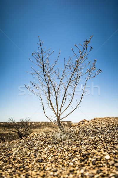 Bush sécher pierre désert espace bleu Photo stock © magann