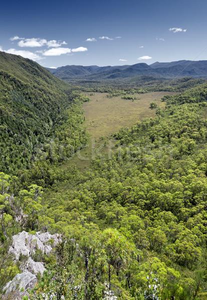 Tasmanie forêt forme de coeur nuages alimentaire herbe Photo stock © magann