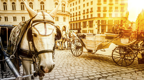 typical horse carriage in Vienna Austria Stock photo © magann