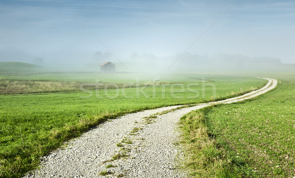 Photo stock: Misty · image · belle · paysage · brouillard · herbe