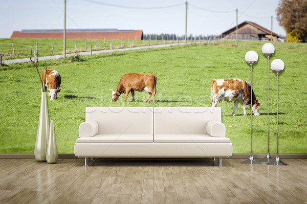 photo wall mural cows Stock photo © magann