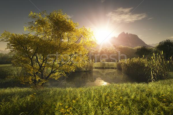 maple tree Stock photo © magann