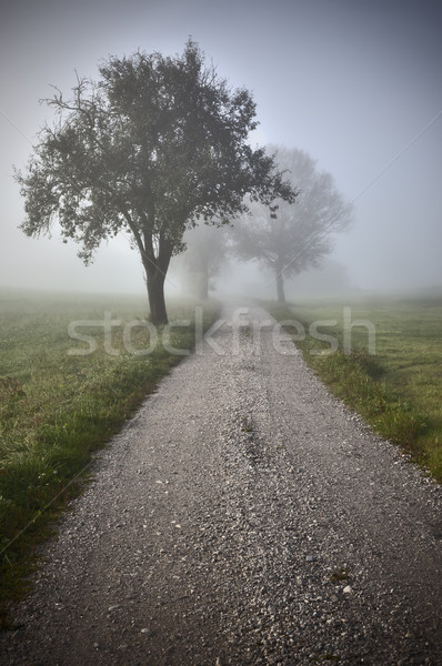 nebel Stock photo © magann