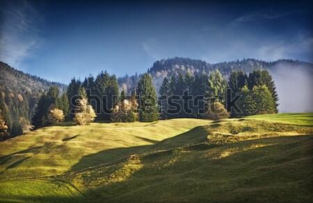 Kép gyönyörű tájkép köd fű erdő Stock fotó © magann