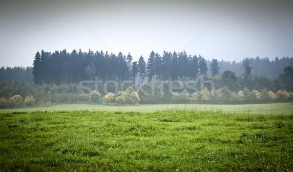 Kép gyönyörű tájkép köd fa fű Stock fotó © magann