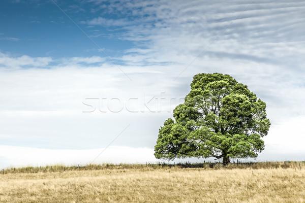 Sul da austrália árvore imagem belo céu pôr do sol Foto stock © magann