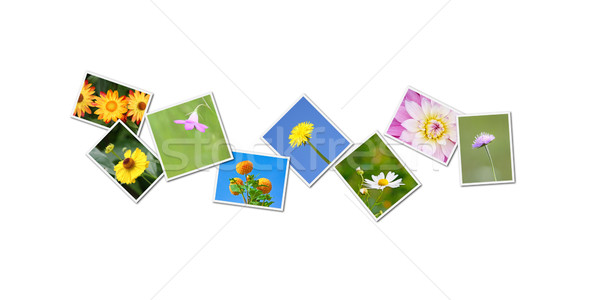 Kwiaty kolaż mój kwiat zdjęcia papieru Zdjęcia stock © magann