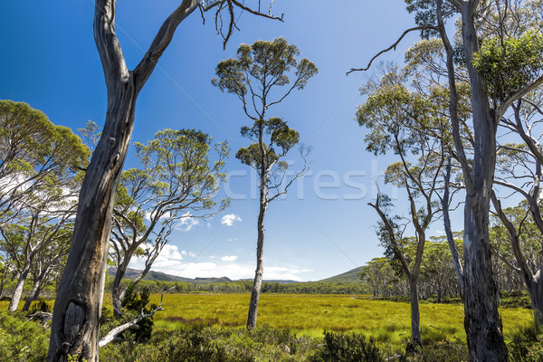 Tasmanië landschap afbeelding mooie berg zomer Stockfoto © magann