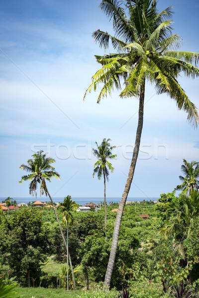 palm trees Stock photo © magann