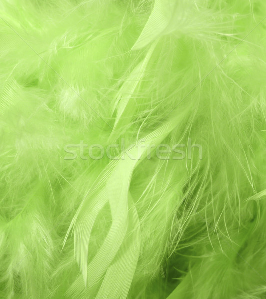 Green feathers Stock photo © magraphics
