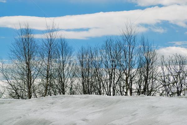 Winter bos berg natuur licht sneeuw Stockfoto © mahout