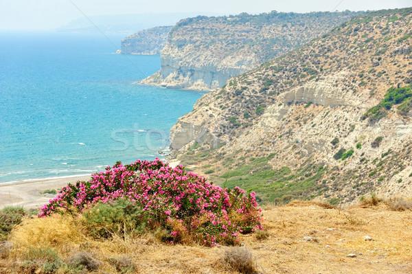Flower bush on sea coast Stock photo © mahout