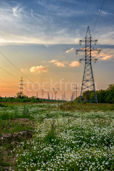 High voltage power line in flower meadow Stock photo © mahout