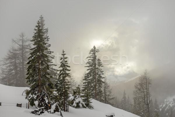 Misty mattina inverno montagna foresta cielo Foto d'archivio © mahout