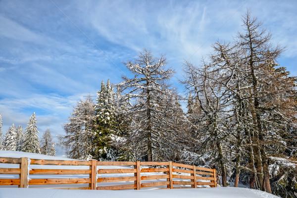 Invierno forestales madera cerca nublado cielo azul Foto stock © mahout