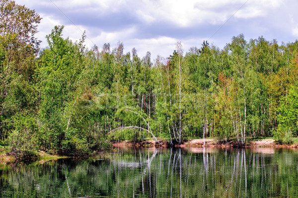 Estanque forestales primavera abedul árbol paisaje Foto stock © mahout
