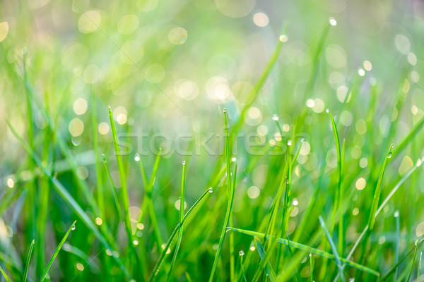Dew drops on green grass Stock photo © mahout