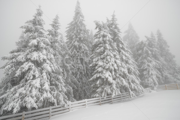 Snowfall in mountain winter forest Stock photo © mahout