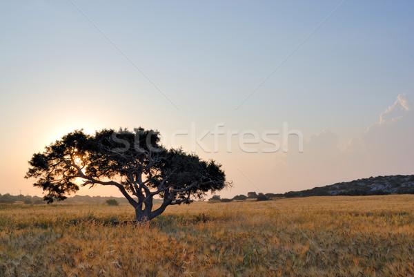 Stok fotoğraf: Yalnız · ağaç · çayır · şafak · gökyüzü · bulutlar
