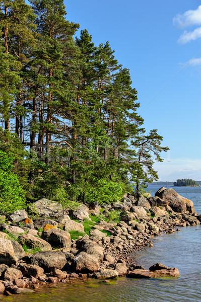 Финляндия соснового лес дерево Сток-фото © mahout