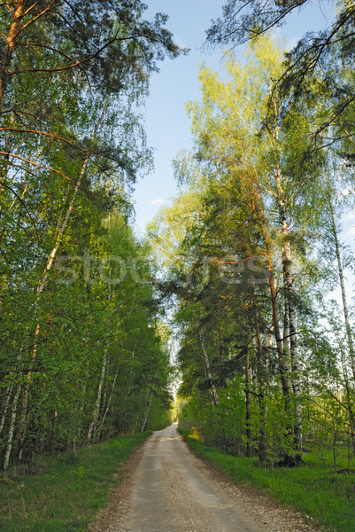 Rural road through the forest Stock photo © mahout