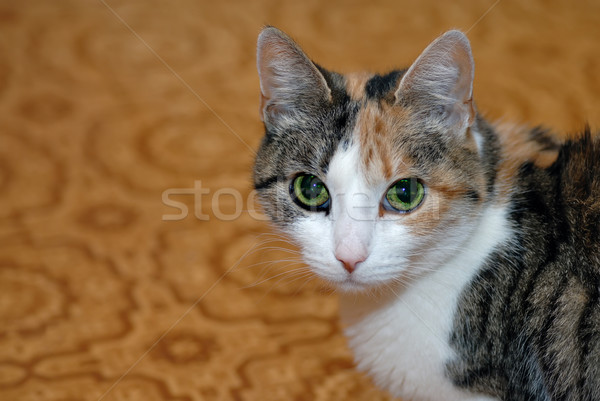 Chat portrait yeux verts visage nature cheveux Photo stock © mahout