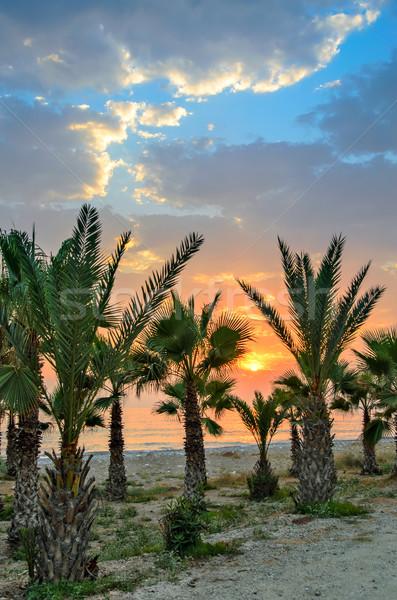 Puesta de sol palma playa mar agua árbol Foto stock © mahout